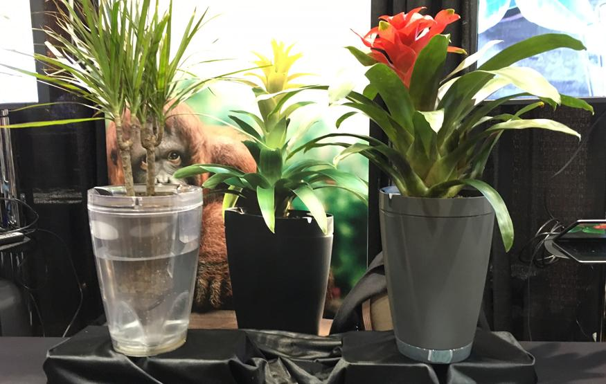 CES 2016: Parrot's self-watering flowerpot finally coming to market